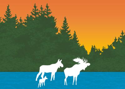 Moose Declining