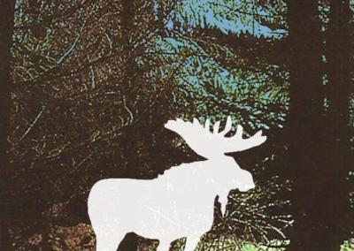 Moose sketch 6